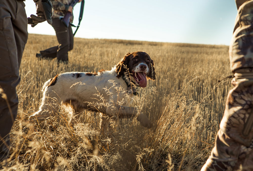 people hunting with radios and dogs